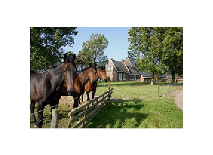 Verblijf 262601 • Bed and breakfast Het Friese platteland • Logement Doosje